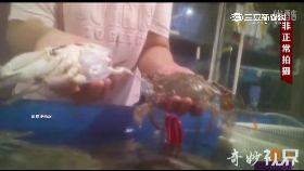 d死蟹會演戲1700