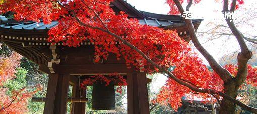 日本鎌倉楓葉+古寺美景。(圖/樂天旅遊提供)