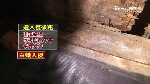 """住家裝潢殺手 誘餌""""滅白蟻""""全面備戰"""