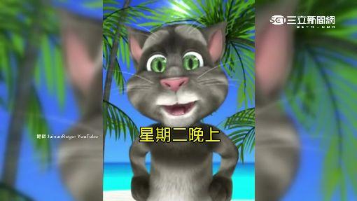 """每逢颱風就有""""牠"""" 搞笑湯姆貓! 全靠藏鏡人"""