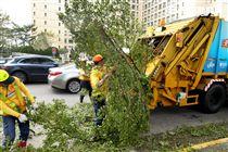 「梅姬」強風豪雨全國停班停課,除了國軍外還有環保局清潔人員辛勞的處理災後掉落滿地的枝葉,一車一車的載走,不知要何時才能清完。(記者邱榮吉/攝影)