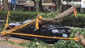 價值179萬的野馬跑車慘遭路樹壓毀(翻攝畫面)