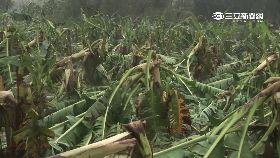 蕉貴農防偷1200