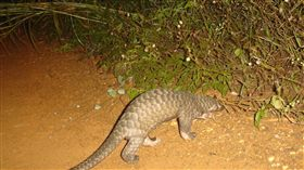 穿山甲 https://www.flickr.com/photos/wildlifealliance/9452433304/in/photolist-fphc71-fphbYU-fp2W7r-fp2VT8-bisnrv-borQcx-bzdfNF-bmdsZc-fPQBEB-aJL6Xt-brcacR-fPPZVg-4Dyku-fp2VHr-bLwNde-JeETqX-fp2VAZ-fp2War-fp2VFF-bW7jaE-6675ZU-bhu5VR-6GE2wq-anqp6q-anqs2u-bCcfXt-8Ldg6f-bphnk3-cRzxMY-ooEHRp-aCkWir-anntx4-bj7qhZ-dSrc8W-brBBpP-9xiPdG-9xfPGX-bn1Tfj-annBJX-9xiRwf-9xiNeQ-wmpdfr-bpZKjS-anqpFG-biqCYB-dqrpWk-aeF2y-bCXqFR-aDb9qb-bCyiBR