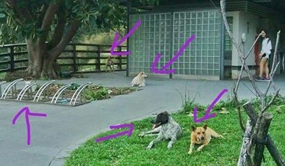 觀音山野狗攻擊8歲兒與7旬阿嬤。(圖/取自爆料公社)