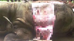 大象,象皮,盜獵/動物之家FB