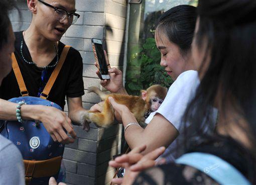 ▲小猴襲胸女遊客。(圖/翻攝自中國青年網)http://news.youth.cn/sh/201610/t20161004_8715958_3.htm