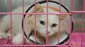 貓遭人高樓丟下 主人籌15萬治療。資料來源中新網
