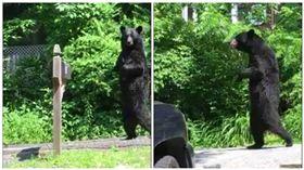 紐澤西呆萌「走路熊」被弓箭射死  當地居民怒罵:沒良心 圖/翻攝自Pedals The Injured Bipedal Bear臉書粉絲專頁