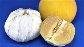 比文旦更飽滿!霜降時節好滋味 就吃Juicy大白柚