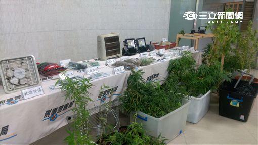 刑事局偵三大隊一舉破獲兩個大麻工廠,起獲大麻成品高達上千萬元(楊忠翰攝)