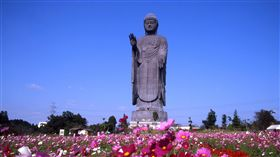 茨城縣牛久大佛,阿彌陀佛,佛教,佛像(圖/茨城縣廳提供)