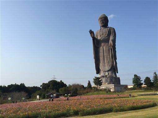 茨城縣牛久大佛,阿彌陀佛,佛教,佛像(圖/公關照)