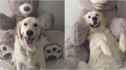 Watson倒在熊娃娃懷中。(圖/翻攝自Instagram)