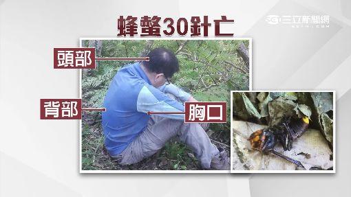 """致命虎頭蜂! 男登山""""螫30針""""撐三天亡"""