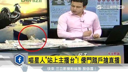 小貓闖新聞直播現場 萌霸占主播台