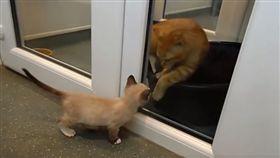 遭遺棄仍堅強長大 貓咪Champ化身小小治療師。資料來源Animals in Distress