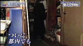 東京熊出沒1200