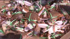 秋日怎吃蟹1800