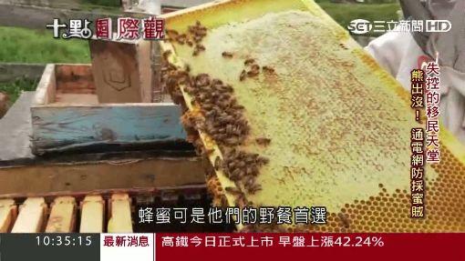 落磯山脈養蜂人家 釀出獨特蜂蜜花酒