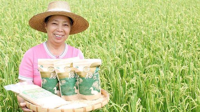美食鳳味/來自屏東大武山 鴨子們種的米?!
