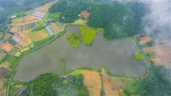 宜蘭雙連埤浮島,颱風後竟飄移百公尺。(圖/蔣維峻提供/中央社)