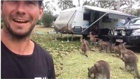 澳洲,袋鼠,呷好逗相報,露營車,排隊 圖/翻攝自臉書《阿中阿中》