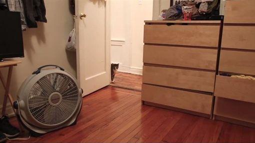 貓主子逃出房間。(圖/翻攝自Jeff Cerulli YouTube)