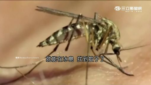 冰島看不到蚊子 唯一一隻是標本!