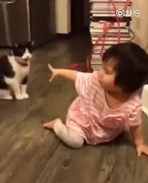 喵星人,寵物 圖/翻攝自YouTube