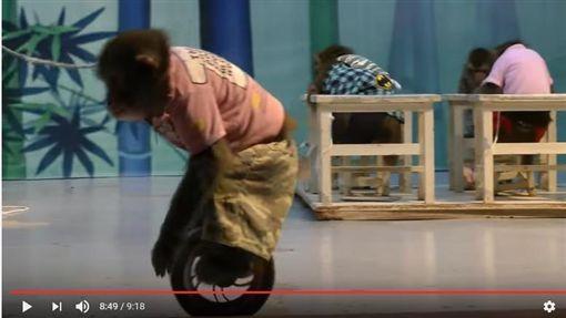 光隆馬戲團保育類日本獼猴為何滯台?林務局說分明(圖/翻攝YouTube)