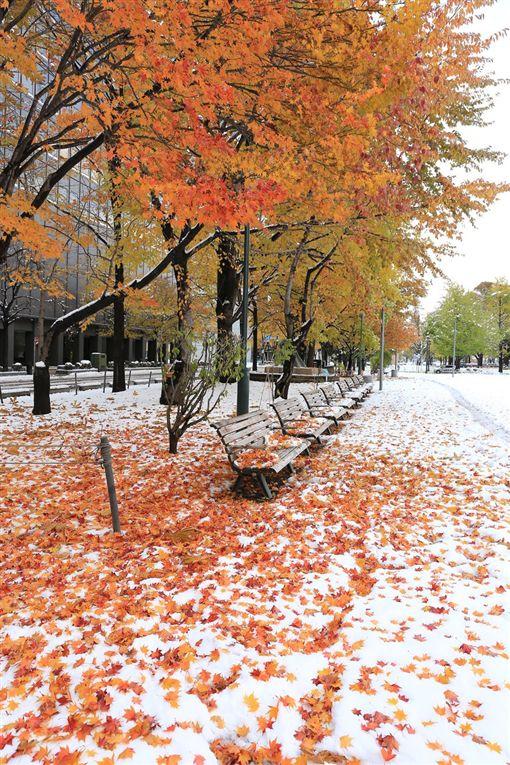 日本,北海道,楓葉,白雪,氣候,全球暖化,照片(推特 https://curazy.com/archives/156356)