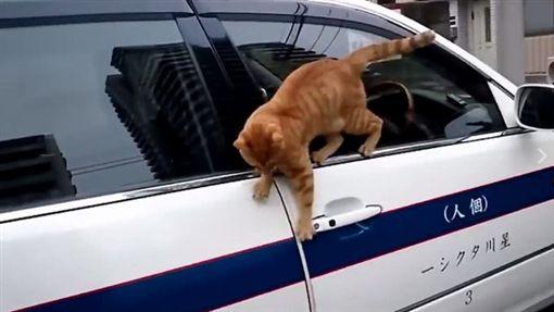 橘貓不小心踩空。(圖/翻攝自推特)