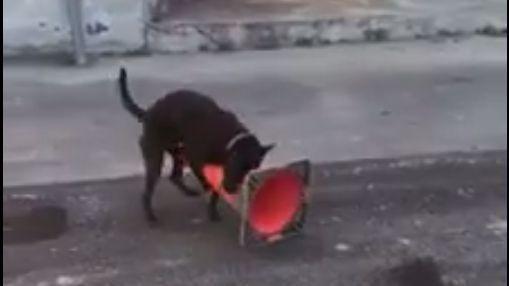 黑狗在路邊拿三角錐自慰。(圖/翻攝自爆料公社臉書)-https://goo.gl/X6TGRI