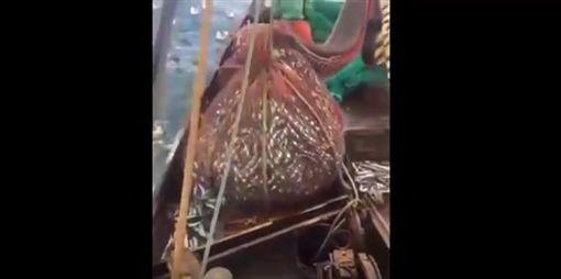 捕魚捕到海獅。(圖/翻攝自Share Tube YouTube)