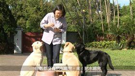 蔡英文,導盲犬 圖/總統府提供