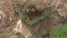紐西蘭地震/Twitter