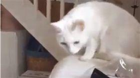 白貓變花貓