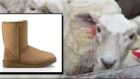 UGG雪靴、羊毛、羊皮、善待動物組織PETA(圖/翻攝自PETA影片)