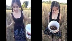 越南,正妹,青蛙,螃蟹,胸器 圖/翻攝自YouTube