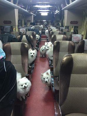 歡迎搭乘「幸狐」專車!整車雪白汪星人 旅程藏感人洋蔥圖/翻攝自臉書社團「爆廢公社」
