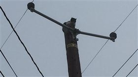 貓咪卡在電線桿上九天(圖/翻攝自Corin Hoggard ABC30 Action News)