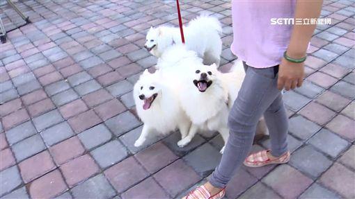 -毛小孩-狗-寵物-狗便-飼主-遛狗-