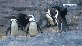 解密吸企鵝1800