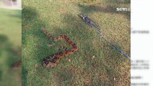 """公園""""遛蛇""""遭驅趕 飼主嗆:為何毛孩可以"""