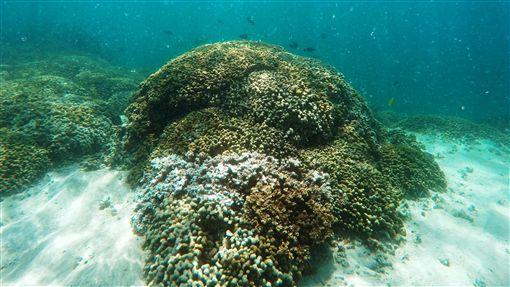 珊瑚 美聯社/達志影像
