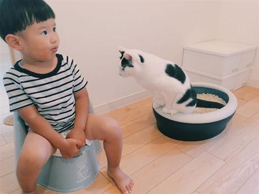 貓咪,寶貝,奇異果,舔 圖/翻攝自rie_mrmt IG
