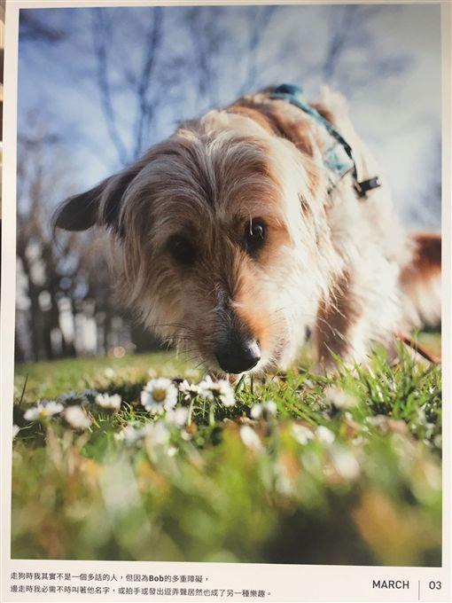 走狗的小女子用愛 讓瑞士狗狗助台流浪犬(圖/中央社) ID-731797