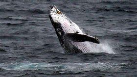 鯨魚_路透