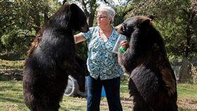 棕熊(圖/翻攝自Mail Online)